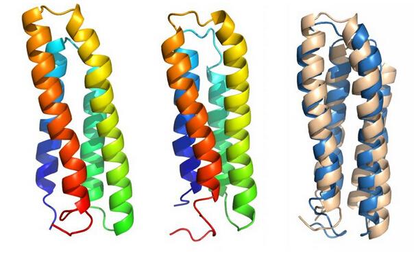 膜蛋白对于光合作用、视觉等功能至关重要。它们还是细胞的看门人,能决定什么可能会通过细胞膜,也帮助从细胞膜外部输入养料和将内部垃圾输出。由于这些多重角色,它们构成了很大一部分的药物靶点。虽然它们的功能很明确,但是关于它们如何折叠的信息却远远落后于球状蛋白质。 Wolynes 及其同事使用原始的基因组信息,来预测氨基酸链将如何通过遵循阻力最小的途径(取决于链上每个残基相关的能量),折叠成为功能蛋白质。一个蛋白质越接近于其功能性原始状态,它就会越稳定。 Wolynes 的开创性理论生动地将这种能量描绘成一个漏