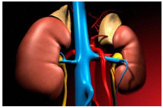 """为了测试""""逐步蠕动尿管系统""""的临床可行性"""
